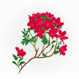 De rode uitstekende vector van de rododendrontak Royalty-vrije Stock Afbeeldingen