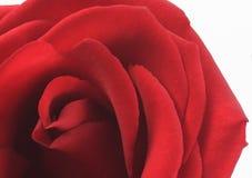 De rode Valentijnskaart nam toe Stock Fotografie