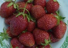 De rode van de het voedselzomer van het aardbeifruit van de de close-upmarkt smakelijke de vruchten van de het dieetaard organisc Stock Foto's