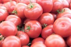 De rode verse rijpe tomaten sluiten omhooggaande en groene zoete groene paprika's op de achtergrond op de markt Royalty-vrije Stock Foto