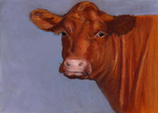 De rode Vleeskoe van Hereford, Oliepastelkleur het Schilderen Royalty-vrije Stock Fotografie