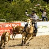 De rodeoconcurrentie in boerderij het roping Royalty-vrije Stock Afbeeldingen