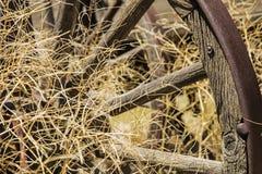 De roestige westelijke amarant van het wagenwiel Stock Foto