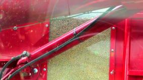 De rogge giet rode aanhangwagenmaaimachine De tractoraanhangwagen wordt volledig gevuld met gouden rijpe korrel tijdens de oogst stock footage