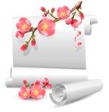 De rollen van de lente met bloeiende kweepeer. Stock Afbeeldingen