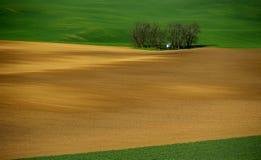 De rollende heuvels van Moravië met tarwe filds Royalty-vrije Stock Fotografie