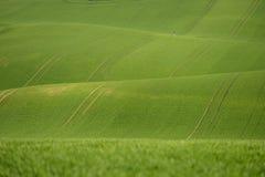 De rollende heuvels van Moravië met tarwe filds Royalty-vrije Stock Afbeelding