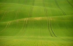 De rollende heuvels van Moravië met tarwe filds Stock Foto