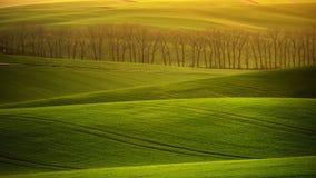 De rollende heuvels van Moravië met tarwe filds Royalty-vrije Stock Foto