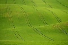 De rollende heuvels van Moravië met tarwe filds Stock Foto's