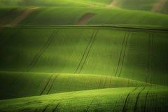 De rollende heuvels van Moravië met tarwe filds Stock Fotografie