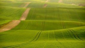 De rollende heuvels van Moravië met tarwe filds Royalty-vrije Stock Foto's