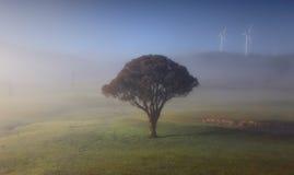 De Rolling heuvels met ochtend vertroebelen eenzame boom en windmolens royalty-vrije stock afbeelding