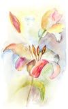De romantische bloemen van de Lelie Royalty-vrije Stock Afbeeldingen
