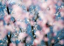 De romantische lente Stock Foto