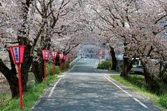 De romantische overwelfde galerij van roze kersenboom komt Sakura Namiki en de Japanse posten van de stijllamp langs een landweg  royalty-vrije stock foto