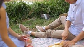 De romantische picknick van jongelui koppelt in liefde in het bos dichtbij het meer stock videobeelden