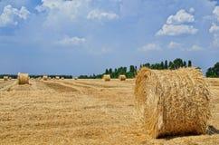 De ronde balen van stro liggen in het gebied na het oogsten Stock Afbeeldingen