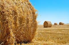 De ronde balen van stro liggen in het gebied na het oogsten Stock Fotografie