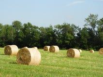 De ronde hooibalen drogen in de hete de zomerzon Stock Afbeelding