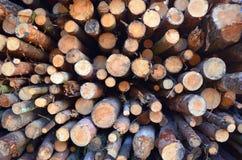 De ronde logboeken van de pijnboomboom liggen in de bos opgestapelde helling royalty-vrije stock foto