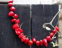 De ronde roodgloeiende Spaanse peperpeper bond in een halve cirkel en het hangen van een houten zwarte muur samen stock fotografie