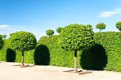 De ronde vormde topiary groene bomen in de koninklijke siergeep van Rundale Stock Fotografie