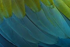 De rood-en-groene Ara, sluit omhoog op veren Stock Afbeeldingen