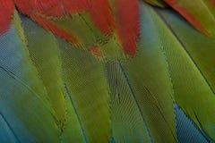 De rood-en-groene Ara, sluit omhoog op veren Royalty-vrije Stock Afbeelding