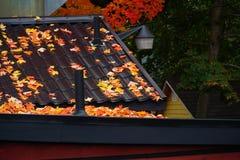 De rood-oranje esdoorn doorbladert op dak stock afbeelding