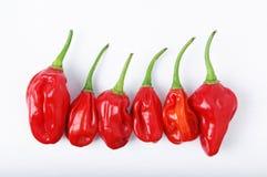 De roodgloeiende Peper van Spaanse pepers Stock Foto's