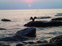 De roofvogel stijgt over de klip in het overzees bij zonsondergang Stock Foto's
