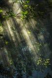 De rook op zonnestraal leidt tot een aardige rechte lijnmening stock foto