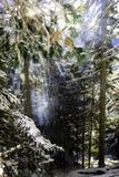 De rook van de brand en de stralen van de zon in de winter Siberische taiga Royalty-vrije Stock Fotografie