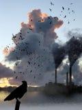 De Rook van de fabriek versus de Vlucht van Vogels Stock Afbeeldingen