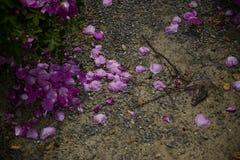 De rosa kronbladen och de döda filialerna på jordningen arkivbilder