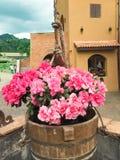 De rosa rosorna Royaltyfri Foto
