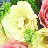 De Rose blanca Foto de archivo libre de regalías