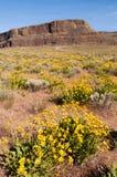 De Rots Oostelijk Washington van de Wildflowersstoomboot Stock Foto's