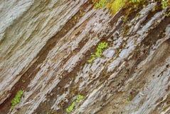 De rots sneed textuur en groen alpien gras op de bovenkant van mounta Stock Foto