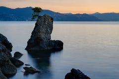 De rots van de pijnboomboom in Portofino-park Royalty-vrije Stock Foto's