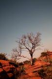 De rots van het zandsteen royalty-vrije stock afbeelding