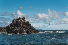 De rotsachtige Kust van Oregon Royalty-vrije Stock Fotografie