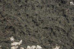 De rotsachtige oppervlakte dichtbij het overzees is korstmoseiland Stock Fotografie