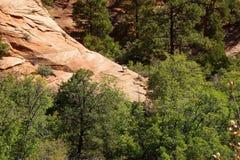 De rotsachtige Schapen van de Berg Stock Fotografie