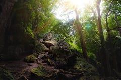 De rotsachtige wegweg vult met zonlicht in het midden van dichte bos/wildernisdekking met hoge boom stock fotografie