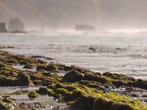 De rotsen van algen op het strand Royalty-vrije Stock Foto's