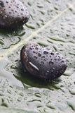 De rotsen van de rivier op een blad Royalty-vrije Stock Afbeeldingen
