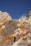 De rotsen van het korstmos Royalty-vrije Stock Foto