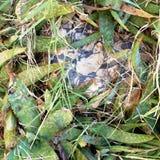 De rotsen zijn het loyaalst stock foto